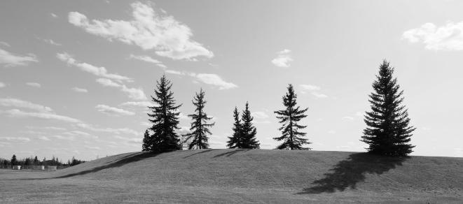 birm-trees-bw