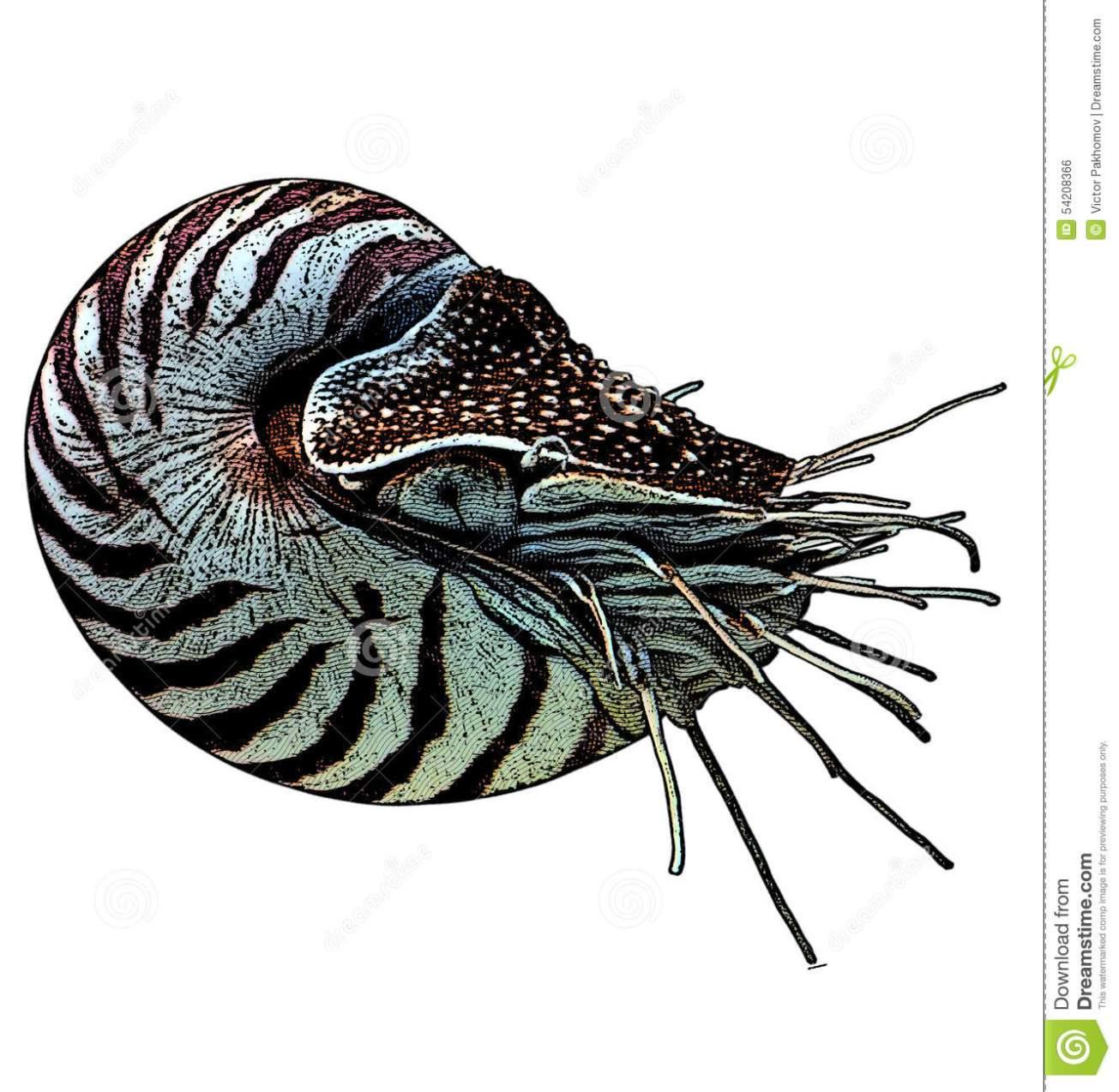 nautilus-color-gravure-effect-photoshop-54208366